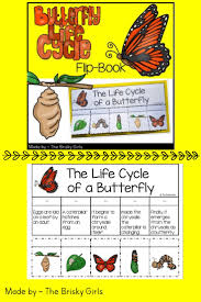 best 25 stages of a butterfly ideas on pinterest butterfly