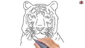 how to draw a tiger face easy step by step drawing tutorials for