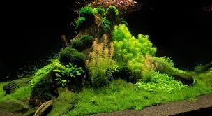 Aquarium Aquascaping The Green Machine Aquascaping Shop Aquarium Plants U0026 Supplies