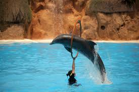 how do you train a dolphin wonderopolis