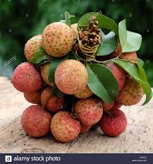 lychee fruit candy vietnam fruit litchi or lychee a tropical fruits that delicious