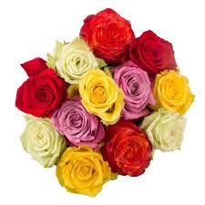 roses for valentines day s day roses in the air 1 877 417 9657