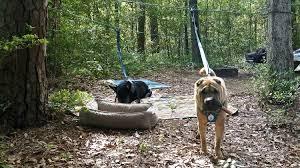 Good Backyard Pets Dsc3794 Jpg