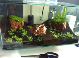 Fluval Edge Aquascape Mein 1 Aquascape Fluval Edge Aquarienvorstellung Aquascaping
