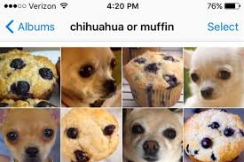 dog photo albums chihuahua or muffin is the sat for stoned animal