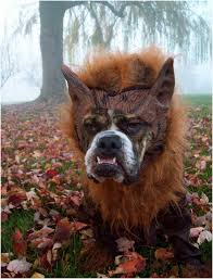 Halloween Costume Ideas For Pets 101 Best Halloween Costumes For Dogs Images On Pinterest Animals