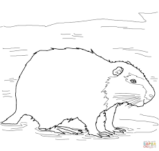 coypu nutria coloring page free printable coloring pages