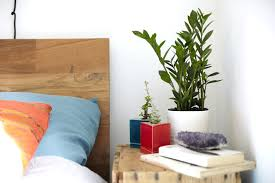 green bedroom feng shui decoration plants bedroom green in feng shui plants bedroom