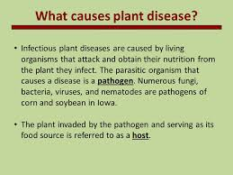 Diseases Caused By Protozoa In Plants - introduction to plant pathology ppt video online download
