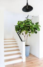 Best Indoor Plants by 53 Best Indoor Plants Images On Pinterest Living Spaces Indoor