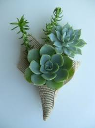 succulent boutonniere succulent boutonniere boutoniere in port stanley on flowers by