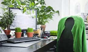 plante bureau les plantes au bureau se mettre au vert au travail hub grade