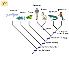 explanation of natural selection adaptation and generations of