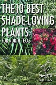 Texas Landscape Plants by Texas Native Landscapes Gallery Texas And Landscaping
