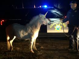 chp chases unicorn through central valley