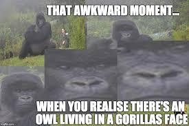 Funny Gorilla Meme - gorrilove http www gorillas org adoptagorilla imgflip