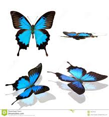 butterfly papilio ulysses collection royalty free stock photos