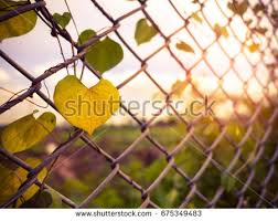 wire fence metal net on sunset stock photo 675349486 shutterstock