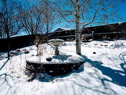 a winter u0027s garden in april benny u0027s colorado garden