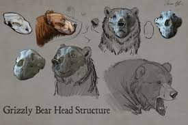 how to draw bears with aaron blaise