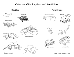 Invertebrate Animals Coloring Pages Archives Mente Beta Most Reptile Coloring Pages