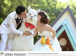 wedding quotes japanese japanese wedding with alpaca pictures quotes pics