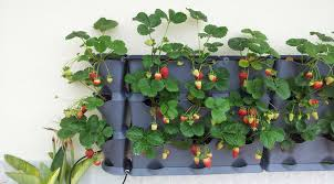 Diy Strawberry Planter by Grow Vertical Strawberry Garden In 10 Diy Ways