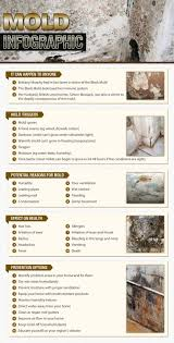 Black Mould In Bathroom Dangerous 97 Best Mold Images On Pinterest Mold Removal Toxic Mold And