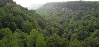 Tennessee Forest images Press resources climate events leave legacy 04 16 14 harvard forest jpg