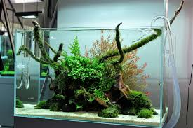 Aquascape Online From Yeah Aquascaping Freshwater Aquarium Pinterest