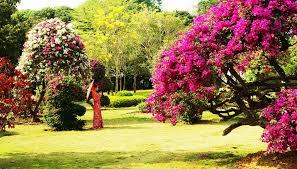 tropical flowers u0026 plants garden yunnan tourism website