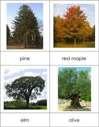 types of trees nomenclature from montessori for everyone