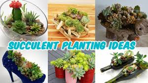 How To Make A Succulent Planter by Amazing Succulent Planting Ideas Youtube