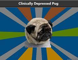 Depressed Pug Meme - tumblr static clincallydepressedpugmeme jpg