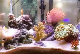 best lighting for corals best reef salt salt for reef tank 2018 reviews top picks guide