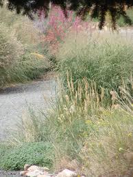 planting native grasses the gift of inspiration habitat hero gardens audubon rockies