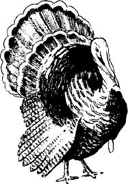 turkey feather clip art clip art library