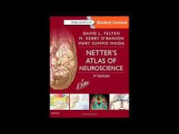 Netter Atlas Of Human Anatomy Online Netters Atlas Of Neuroscience 3e Netter Basic Science Youtube