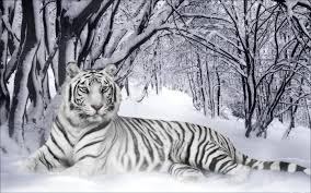 winter animal desktop wallpaper wallpapersafari