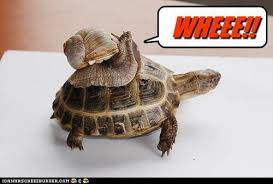 Turtle Memes - a snail on a turtle animals know your meme