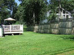 best trees to plant for privacy bamboo privacy fence trees