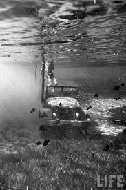jeep snorkel underwater 26 best underwater jeeps images on pinterest jeep stuff jeep