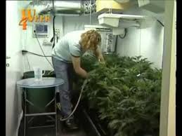 chambre culture indoor culture indoor cannabis part 3 hd
