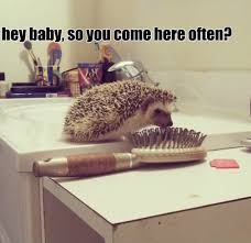 Hedgehog Meme - jokes 2014 hedgehog