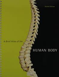 Human Anatomy And Physiology By Elaine Marieb Pdf Human Anatomy U0026 Physiology With Brief Atlas And Interactive