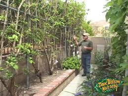 Exclusive FREE Liquorice Pompom Tutorial Square Feet Backyard - Backyard orchard design