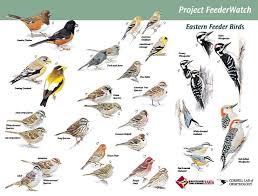 Indiana birds images 17 best indiana birds images backyard birds birds jpg