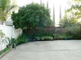 large backyard plum fruit tree growing garden fruit trees