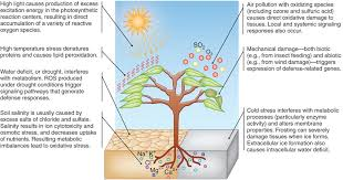 High Heat Plants Complex Responses And Protective Systems Are Triggered Under These