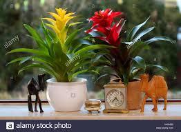 windowsill indoor plants bromelias figures tin clock window